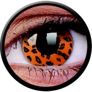 Yellow Leopard (Jahreslinse) (1x2)