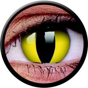 Cats Eye (Jahreslinse) (1x2)